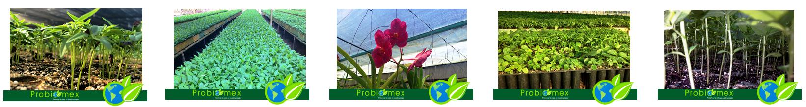 home probiomex2