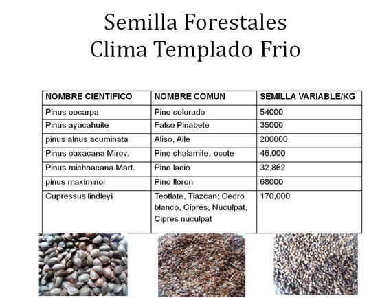 SEMILLAS FORESTALES CLIMA TEMPLADO