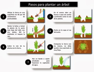 plantar-un-arbol-pasos